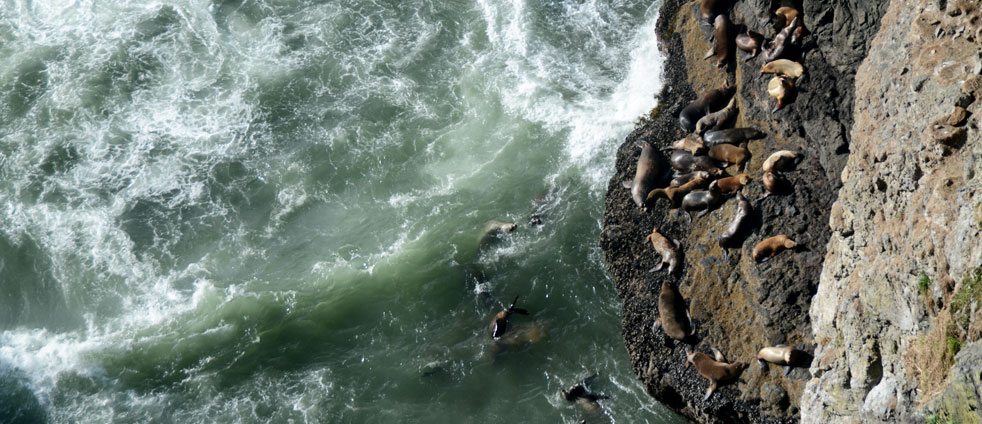 sea-lions-at-the-sea-lion-cave-in-oregon