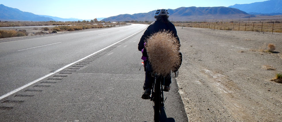 bicycle-riding-with-a-rolling-bush-in-the-desert